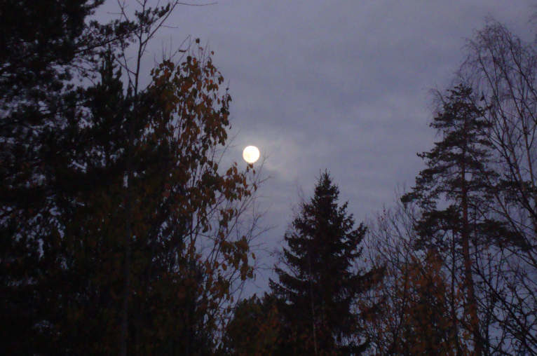 The moon, setting, with trees in the foreground.